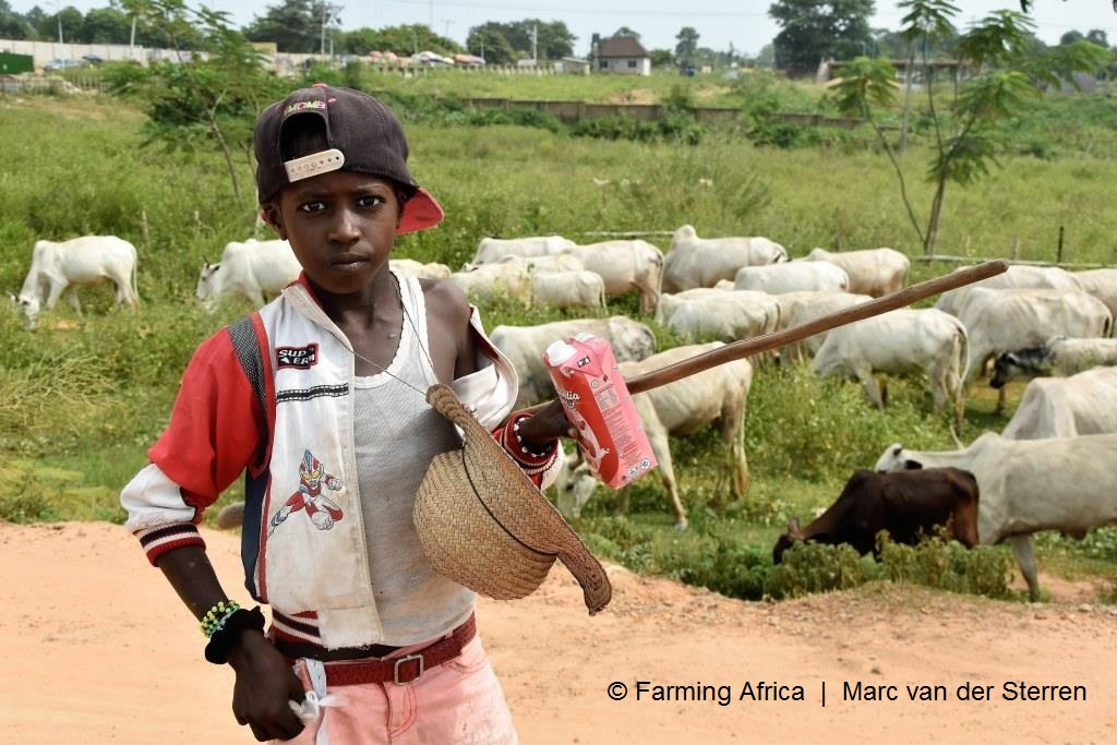 The fulani are the most important dairy producers of Nigeria